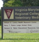 Veterinary Schools: A God Sent for Rare Dogs!
