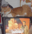 Martian Cats: Understanding Strange Cat Behaviour