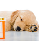 dog-and-antibiotics